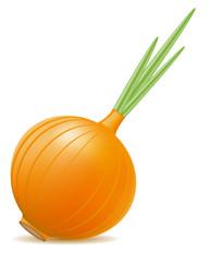 onion illustration