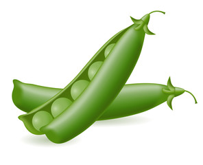 peas illustration