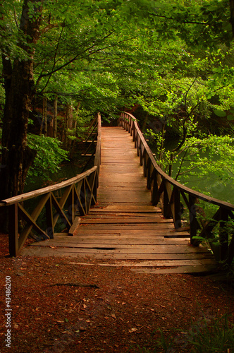 Bridge to the jungle Seven Lake Bolu Turkey