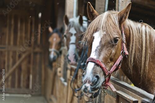Fototapeten,pferd,pferd,stall,equine