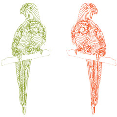 two parrot illustration