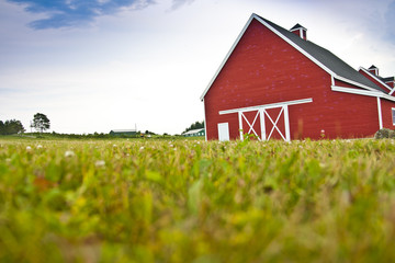 Red Barn in a Field