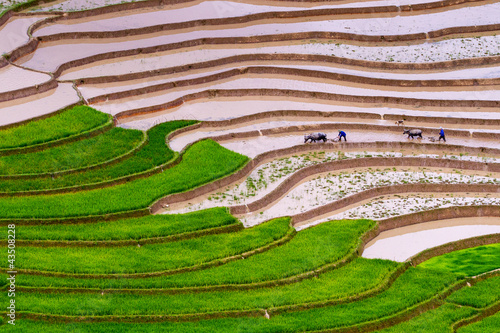Tu Le Rice Terraces
