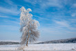 Winter landscape of frosted tree against a blue sky
