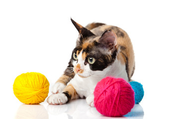 Cat Devon Rex on white background. kitten with balls of threads
