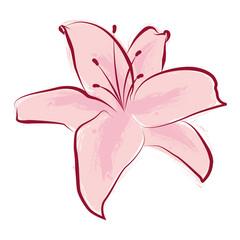 Giglio rosa