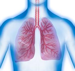 Thorax + Lunge vor weiss