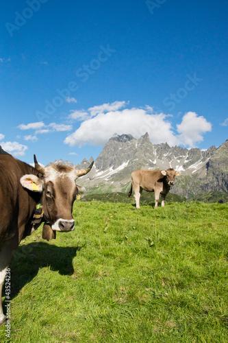 Aluminium Glückliche Kühe
