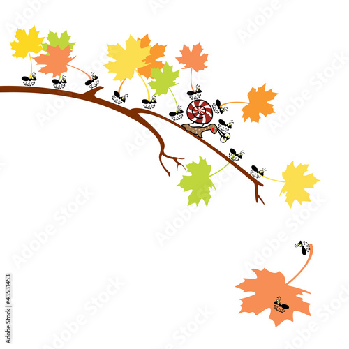 snail  ants and autumnal leaves