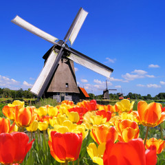 Traditional Dutch windmills with vibrant tulips