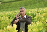 A mature man in a middle of a vineyard.