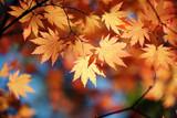 Fototapety Autumn maple leaves