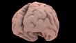 Camera orbits round a human brain.