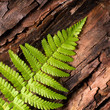 Fresh fern on bark background