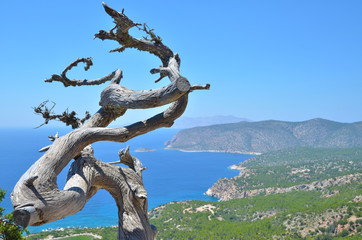 Blue background, branch, country and sea