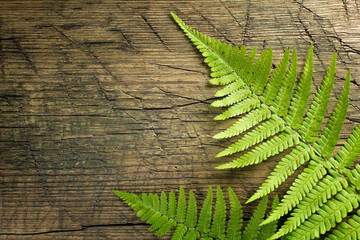 Fresh fern border on vintage wooden background