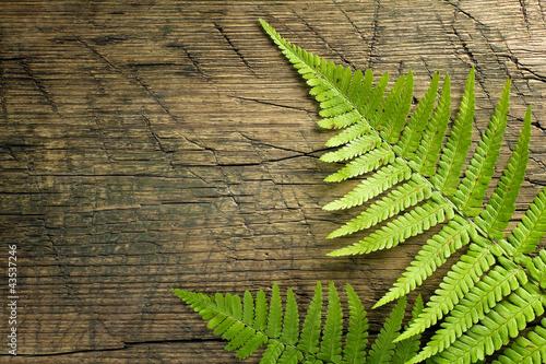swieza-paproci-granica-na-rocznika-drewnianym-tle