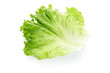 Green salad leaf on white, clipping path included