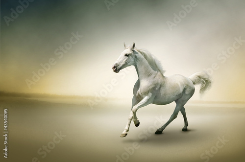 Stock Photo: White horse in motion