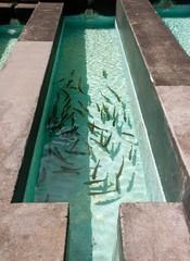 pisciculture, élevage de poissons en bassin