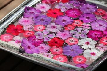 Blütenschale