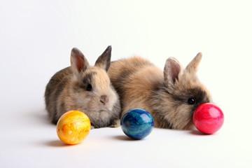 Zwei Kaninchen mit Ostereiern