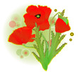 a red poppy flower illustration