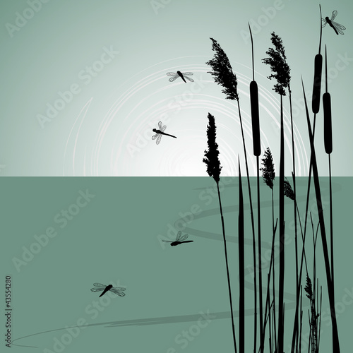 Reeds in the water and  few dragonflies  - vector