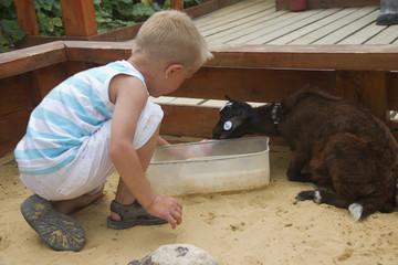 Boy feeding small black goat from bottle
