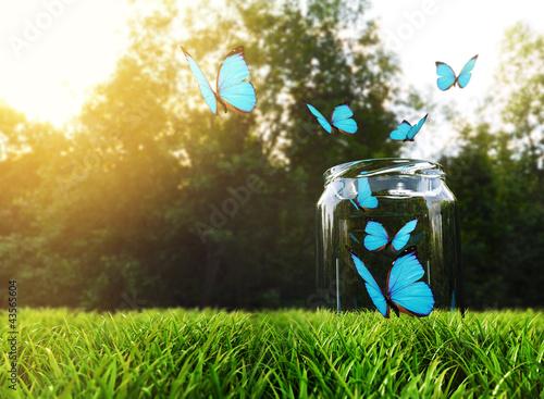 Foto op Aluminium Vlinder Butterflies