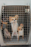 dogs in kennel poster