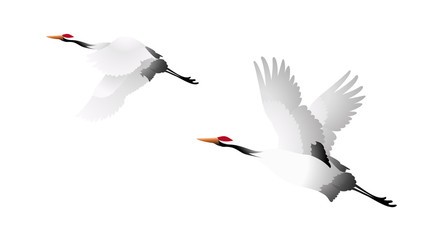 vector icon birds