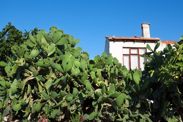 Mediterranen home, surrounded by cactus