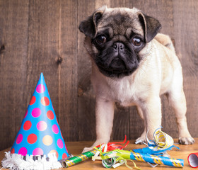 Happy Birthday Pug Puppy Dog