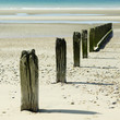 Wooden posts on the beach