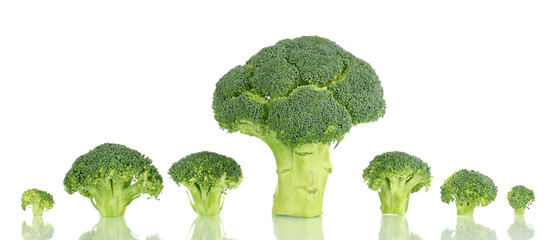 Fresh broccoli in line isolated on white