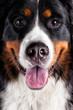 close up dog head
