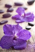 fleur d'orchidée pour spa