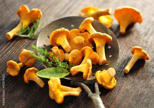 Leinwanddruck Bild Pilze, Kräuter