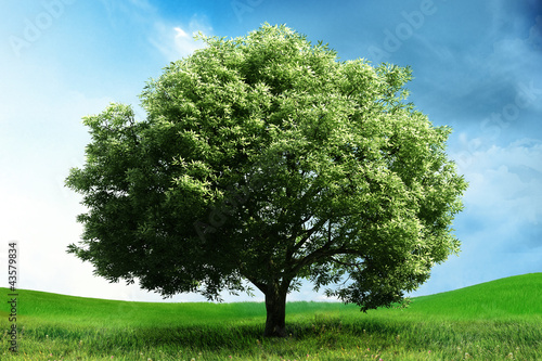 landscape with a big tree