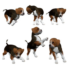 3D Beagle Puppies