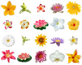 Fototapety fleurs