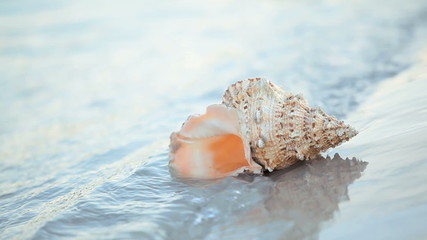 Beautiful seashell placed at near summer sea with waves to it