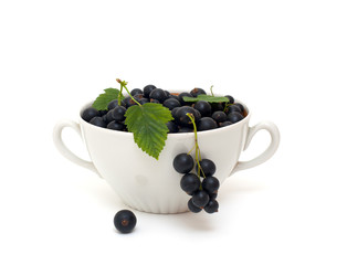 bowl with black currant