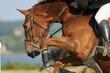 cheval sautant vue de côté