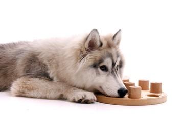 Junger Hund und Beschäftigung