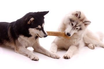 zwei Hunde kämpfen um Knochen