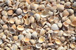 An Abstract Background Texture Of Sea Shells
