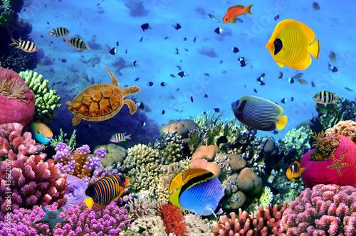 Zdjęcie koralowej kolonii