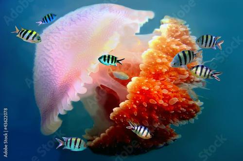 Fototapete Tier - Taucherfoto - Fische